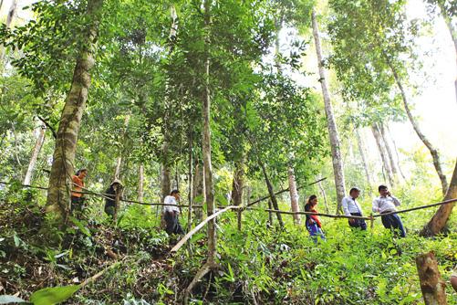Du khách đi bộ trong những vạt rừng còn nhiều nét hoang sơ.